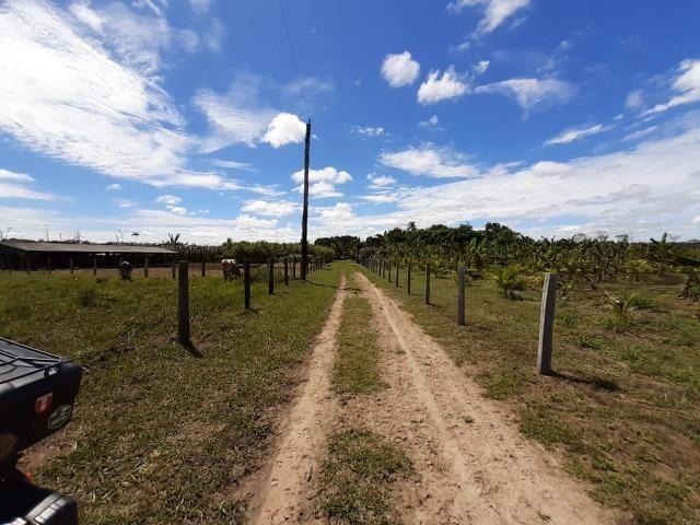 Fazenda com 160 hectares em Mucajai/RR, ler descrição do anuncio - Foto 14
