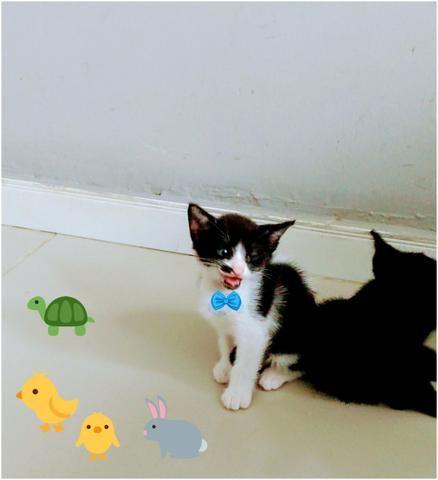 Adocao de gatinho - ler todo o anúncio - Foto 2