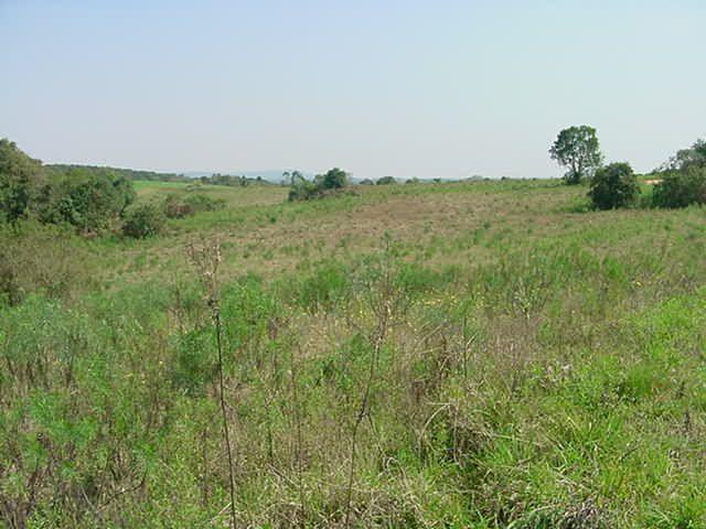 Terreno à venda em Sabiá, Araucária cod:7227-MORO - Foto 2