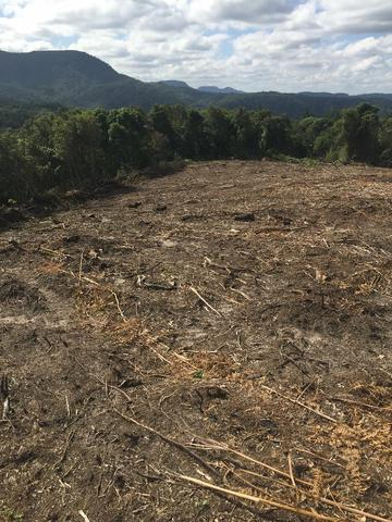Terreno de planta, e reflorestamento - Foto 3