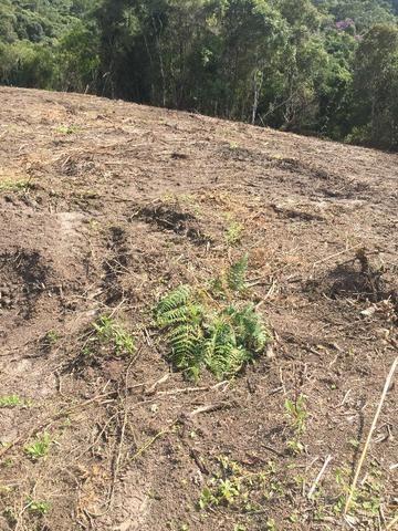 Terreno de planta, e reflorestamento - Foto 2