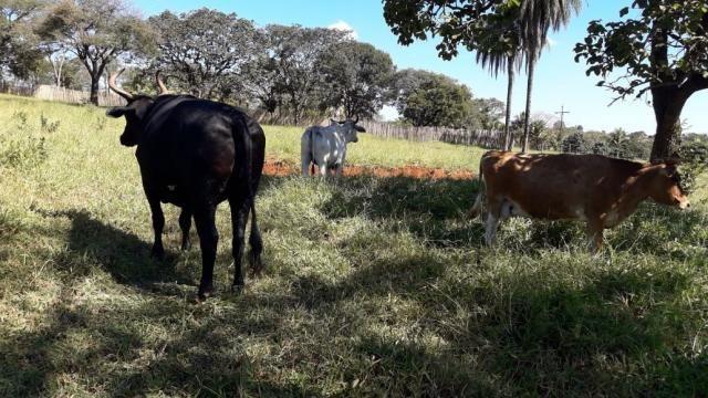 Fazenda à venda, 3 quartos, 3 vagas, Tamanduá - Sete Lagoas/MG - Foto 3