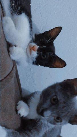 Gatinhas pra adoção , castração garantida - Foto 3