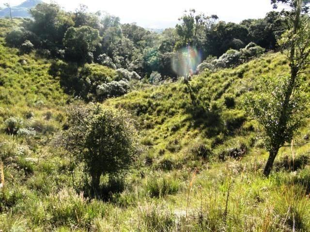 Pense num lugar bonito, sitio 5 hectares a 1000 m de altitude - Foto 7