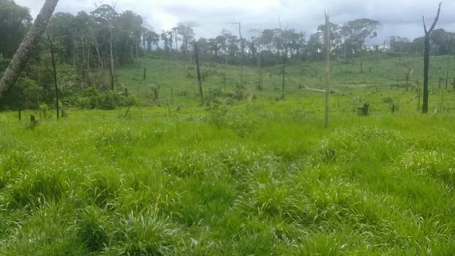 Vendo área de terra com com 15 cabeça de gado