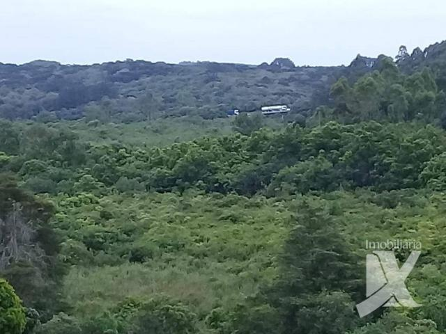 Chácara - venda, 176.055 m² por r$ 1.500.000 - botiatuva - - campo largo - pr - Foto 18