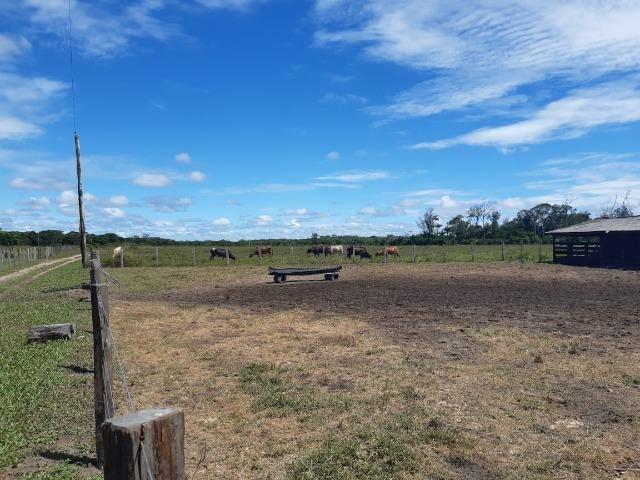 Fazenda com 160 hectares em Mucajai/RR, ler descrição do anuncio - Foto 13