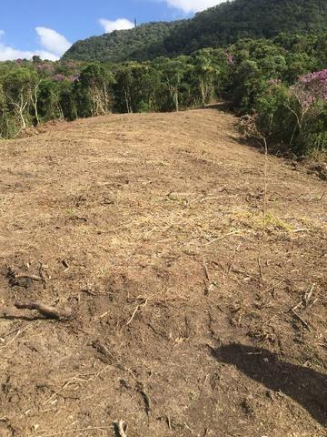 Terreno de planta, e reflorestamento - Foto 5