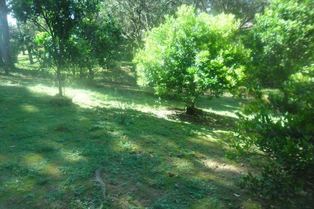 Vende-se chácara em Areia Branca dos Assis - Mandirituba (cód. A199) - Foto 10