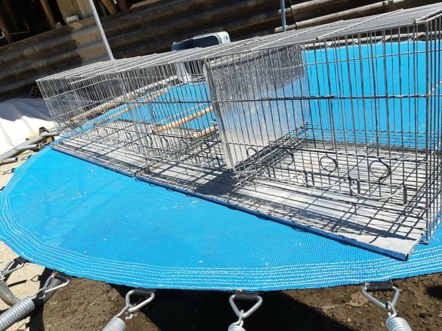 Vendo gaiola criadeira - Foto 2