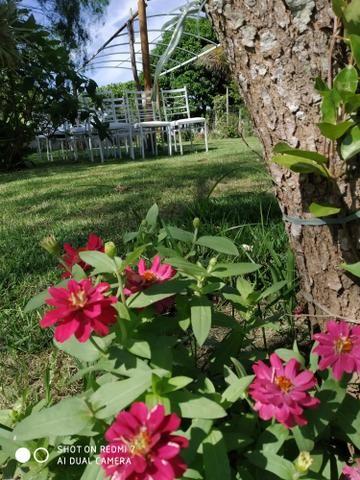 Cerimonial Garden Goddio - Foto 5