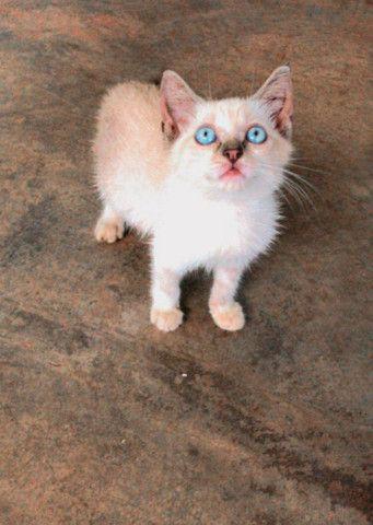 Doando esse gatinho - Foto 3