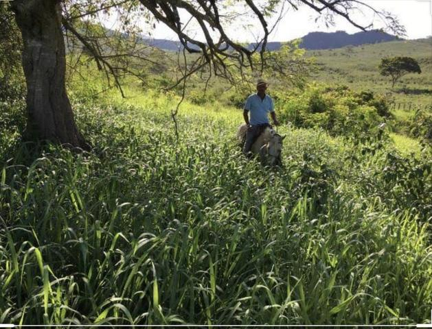 Terras com 100 hectares em alto alegre aceito Negociacao