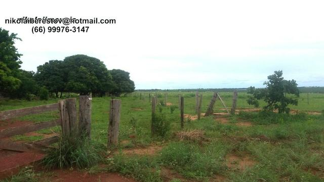 Fazenda vale do kuluene 8.040 hectares nikolalimveis