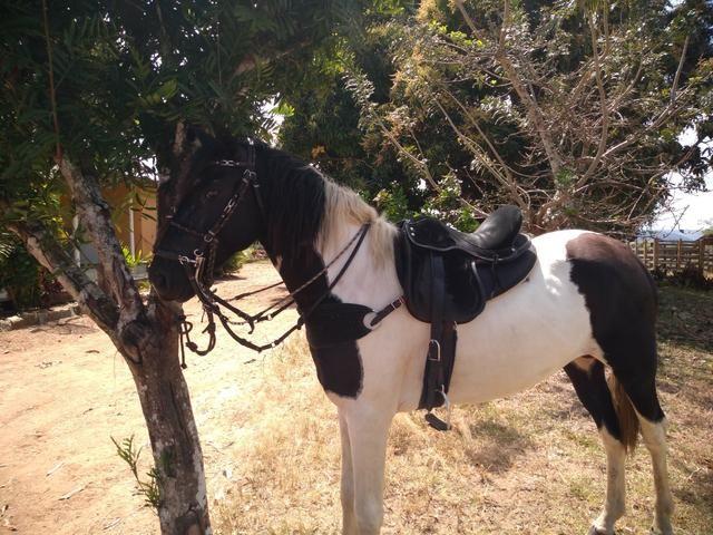 Cavalo Mangalarga Pampo de preto - Foto 2