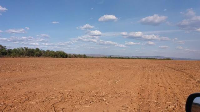 Fazenda Modelo em Palmas-TO [ Agricultura ] - Foto 5