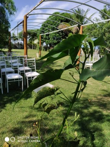 Cerimonial Garden Goddio - Foto 4