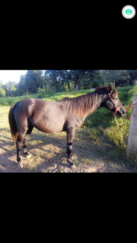 Cavalo bom  - Foto 2