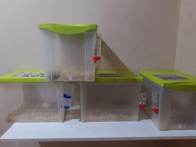Kit roedor ! Rato , hamster , gerbil , camundongo - Foto 3