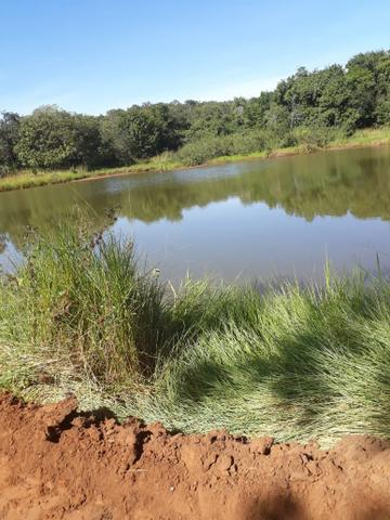 Fazenda 80 Alqueires município campina verde - Foto 4