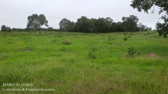 Fazenda próximo a Aragarças e 30 km de Ponte Alta para gado e lazer! - Foto 4
