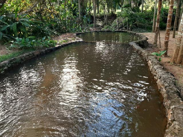 Alugamos Sítio com Cachoeira - Santa Leopoldina - Foto 8
