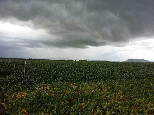 Fazenda Modelo em Palmas-TO [ Agricultura ] - Foto 9