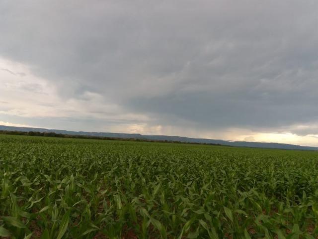 Fazenda Modelo em Palmas-TO [ Agricultura ] - Foto 4