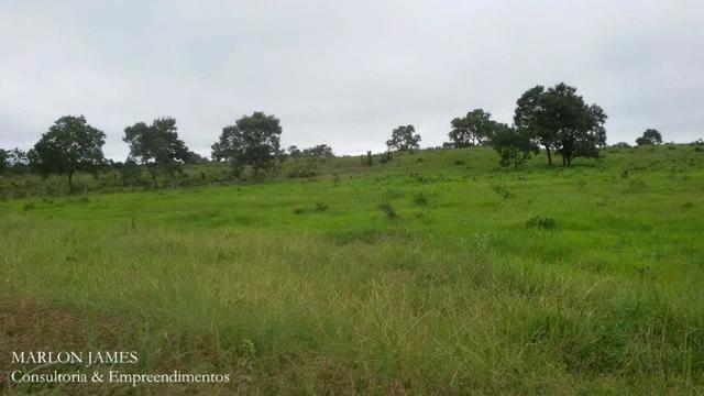Fazenda próximo a Aragarças e 30 km de Ponte Alta para gado e lazer! - Foto 8