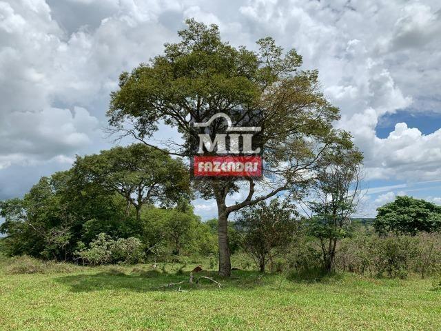 Fazenda 43 Alqueires ( 208 hectares ) Bonfinópolis-GO - Foto 17