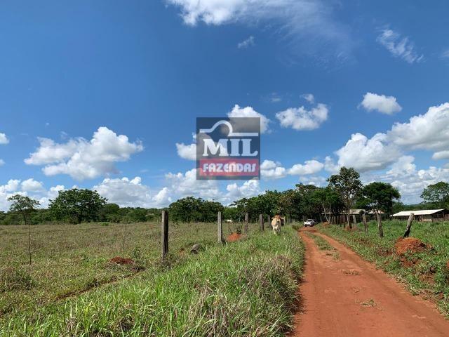 Fazenda 43 Alqueires ( 208 hectares ) Bonfinópolis-GO - Foto 11