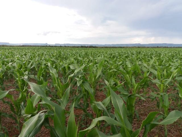 Fazenda Modelo em Palmas-TO [ Agricultura ] - Foto 10