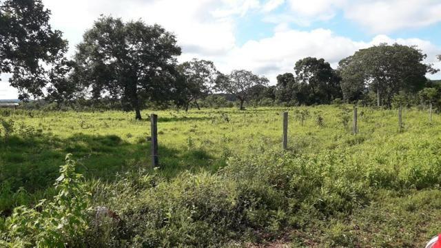 Fazenda com 561 há (116 alq) maior valorização pecuarista próximo a capital - Foto 4