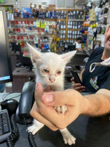Gatinhos para adocao responsável  - Foto 2