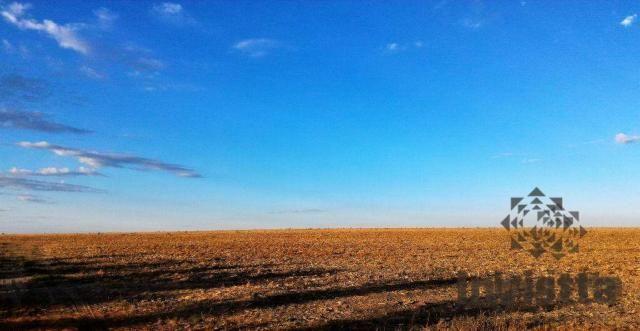 Oportunidade de excelente fazenda para agricultura!!! - Foto 2