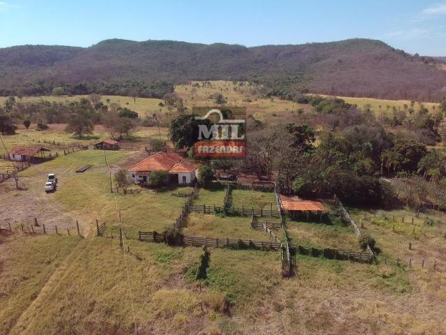 Cultura de Fazenda 90 alqueires ( 435 hectares ) Jandaia-GO