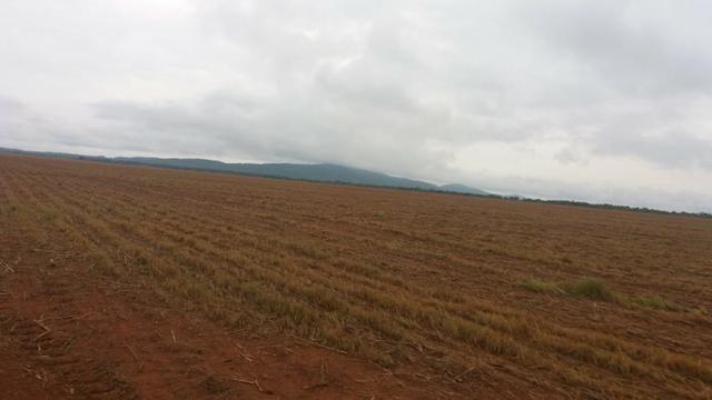 Fazenda Modelo em Palmas-TO [ Agricultura ] - Foto 2