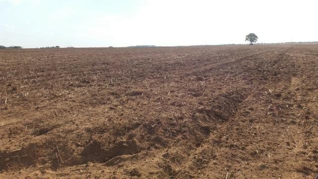 Fazenda Modelo em Palmas-TO [ Agricultura ] - Foto 7