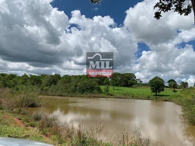 Fazenda 43 Alqueires ( 208 hectares ) Bonfinópolis-GO - Foto 5