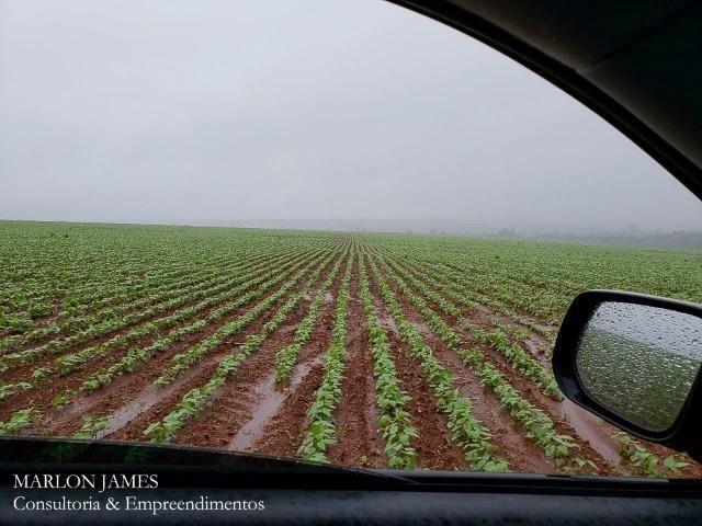 Fazenda em Campo Alegre de Goiás para plantio de soja! - Foto 8