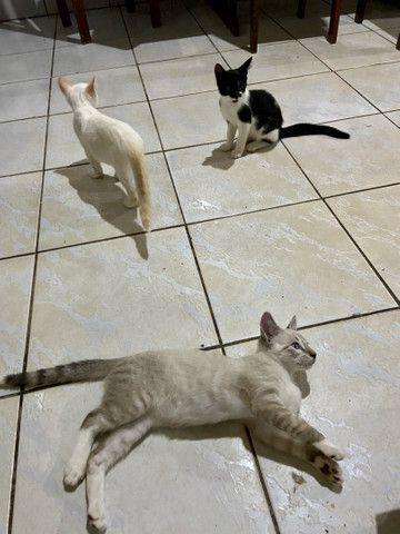 Gatinhos filhotes 2 meses - Foto 5