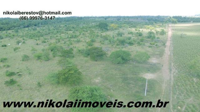 Fazenda 112 hectares nordete mt nikolaiimoveis