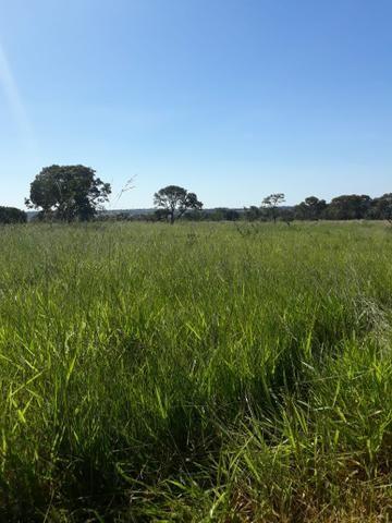 Fazenda 80 Alqueires município campina verde - Foto 6