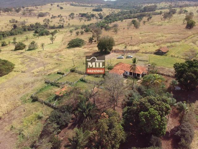 Cultura de Fazenda 90 alqueires ( 435 hectares ) Jandaia-GO - Foto 13