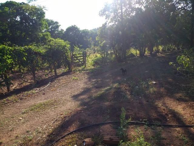Chácara Goiânia Margem BR-153 (Pista Dupla) - Foto 9