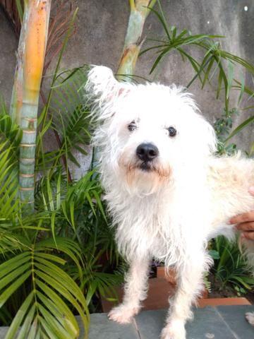 Doando cachorro - Foto 2