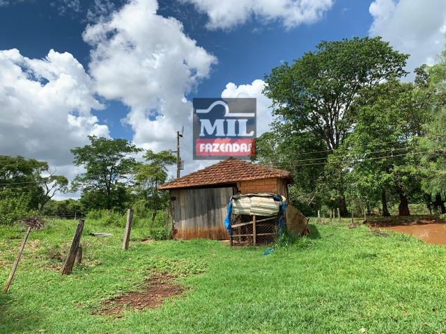 Fazenda 43 Alqueires ( 208 hectares ) Bonfinópolis-GO - Foto 14