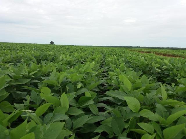 Fazenda Modelo em Palmas-TO [ Agricultura ] - Foto 6
