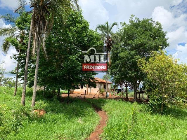 Fazenda 43 Alqueires ( 208 hectares ) Bonfinópolis-GO - Foto 13