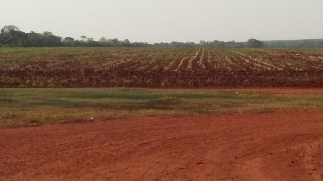 Fazenda de Cultura no MS, 480 ha
